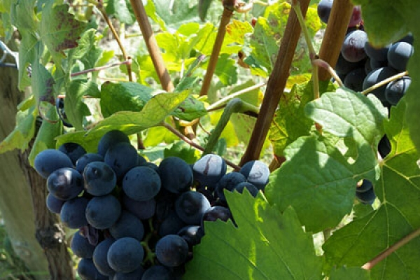 Дегустация вин, винный тур